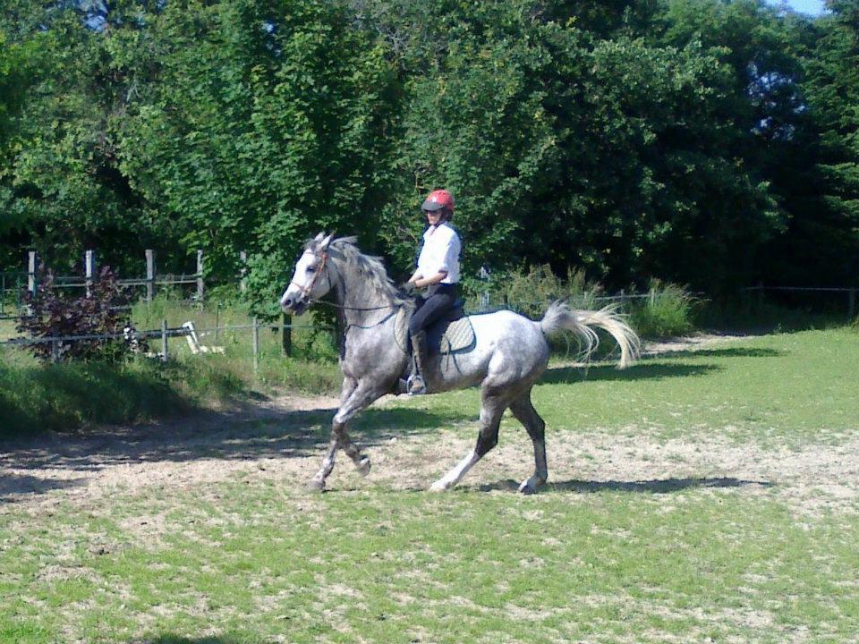 albane haubin cheval